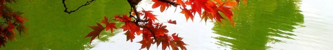 cropped-fall-autumn-colors-leaves-mexican-wallpapers-1600x1200.jpg
